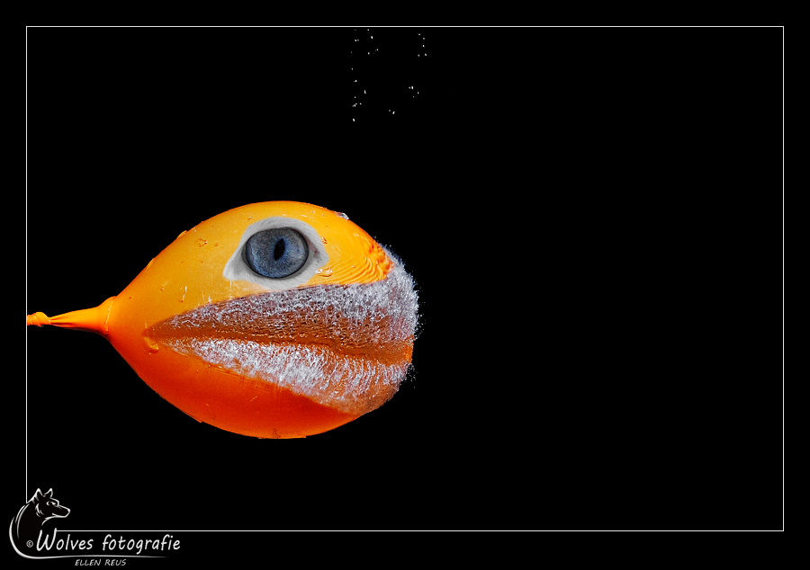 Balloon Fish - Nominee in the 8th annual Photography Masters Cup in the category Abstract - professionals - High speed fotografie - Door: Ellen Reus - Wolves fotografie