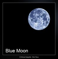 Blue Moon - Creatieve fotografie - Door: Ellen Reus - Wolves fotografie