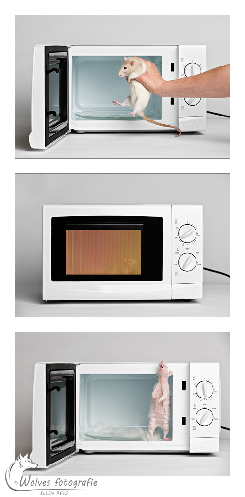 Never put a living animal in a microwave - Nominee in the 9th annual Photography Masters Cup in the category Fine Art - professionals - Uiteraard heeft het ratje nooit gevaar gelopen en is de magnetron nooit aan geweest met het ratje erin - Rattenfotografie - Dierfotografie - Door: Ellen Reus - Wolves fotografie