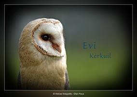 Kerkuil - Vogelfotografie - Dierfotografie - Door: Ellen Reus - Wolves fotografie