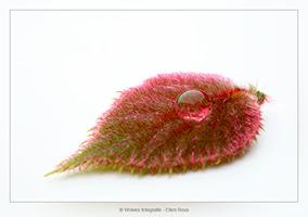 Jong kiwiblad met druppel - Planten- en bloemenfotografie - Door: Ellen Reus - Wolves fotografie