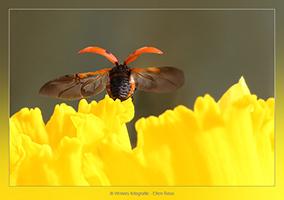 Lieveheersbeestjes - Dierfotografie - Macrofotografie - Door: Ellen Reus - Wolves fotografie