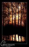 Land, water, lucht en bomen - Haarzuilen - Landschapsfotografie - door: Ellen Reus - Wolves fotografie