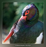 Ondanks het zonnetje toch nog wat fris - Vogelfotografie - Dierfotografie - Door: Ellen Reus - Wolves fotografie