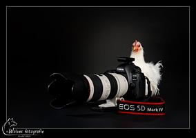 Canon EOS 5D Mark IV met kip Salt als fotograaf - Productfotografie - Dierfotografie - Door: Ellen Reus - Wolves fotografie