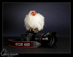 Kip Salt op de Canon EOS 60D - Productfotografie - Dierfotografie - Door: Ellen Reus - Wolves fotografie
