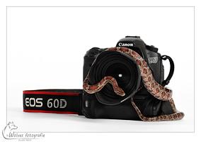 Canon EOS 60D met ringslang Shadow - Productfotografie - Dierfotografie - Door: Ellen Reus - Wolves fotografie