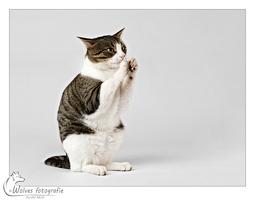 Tijger - Kattenfotografie - Dierfotografie - Door: Ellen Reus - Wolves fotografie