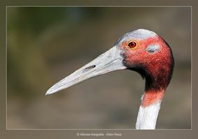 Vogelkop - Vogelfotografie - Dierfotografie - Door: Ellen Reus - Wolves fotografie
