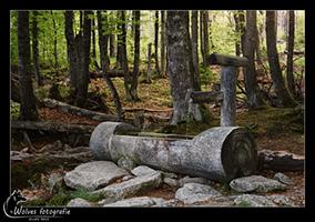 Waterpomp in het bos - Bayerischer Wald - Duitsland - Landschapsfotografie - door: Ellen Reus - Wolves fotografie