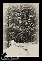 Winterwonderland - Bayerischer Wald - Duitsland - Landschapsfotografie - door: Ellen Reus - Wolves fotografie